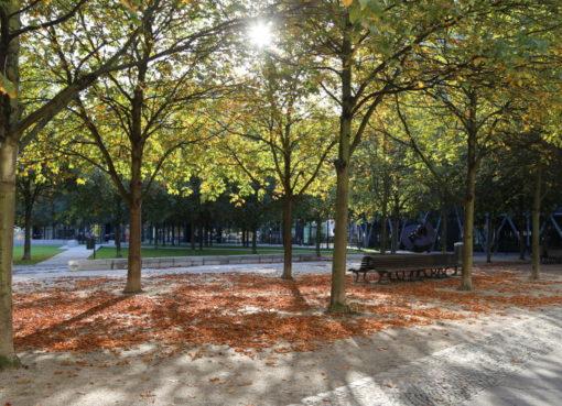 Herbstsonne im Besselpark